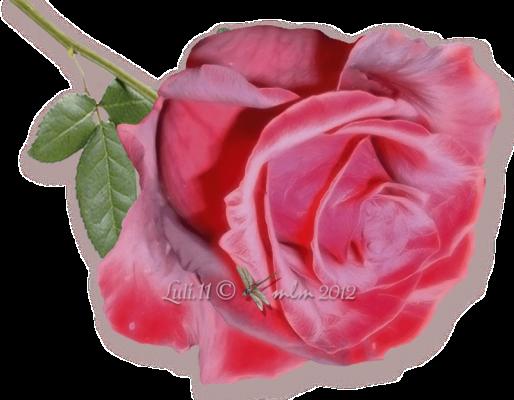 .a radura la rosa 2012 (4)