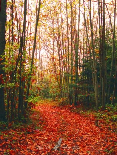 """""""Autunno"""" ne """"La radura nel bosco incantato"""" - 16-10 2012 - Luli.11 ©  mlm 2012"""