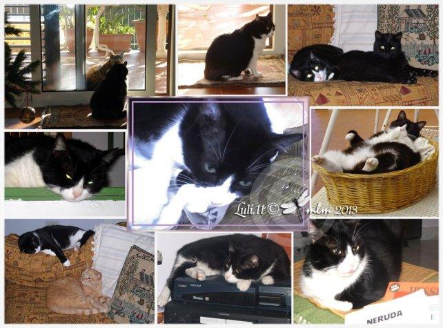 Gigia - Il giornale dei gatti - Luli.11 © grafica mlm 2013