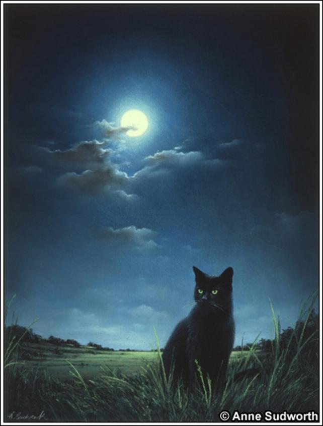 mirti gatto notte (3)