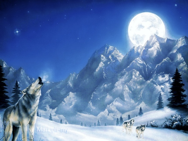 night sky in snow howling moon